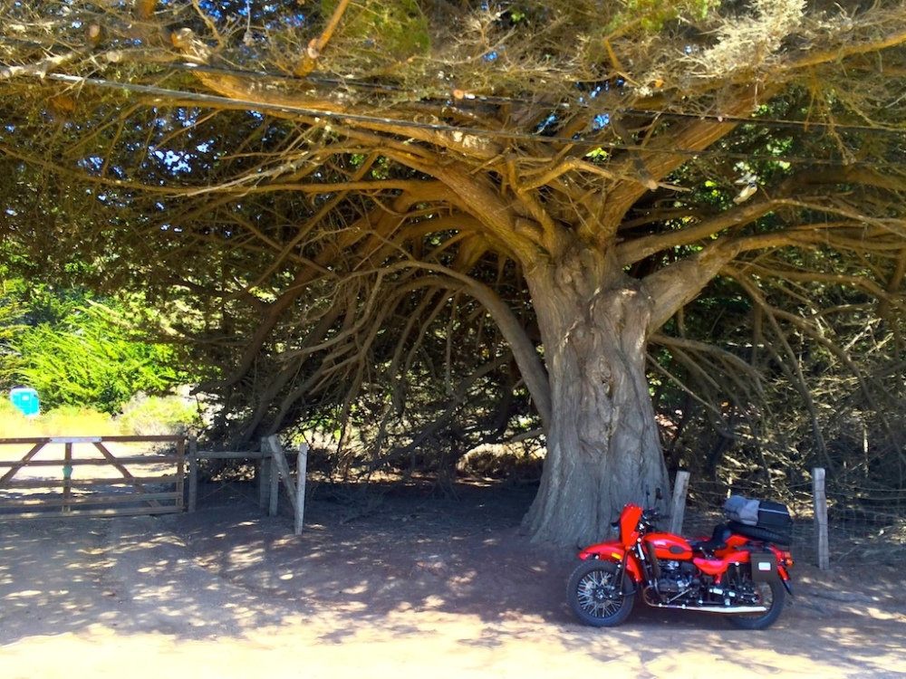 Roadside tree and our Ural