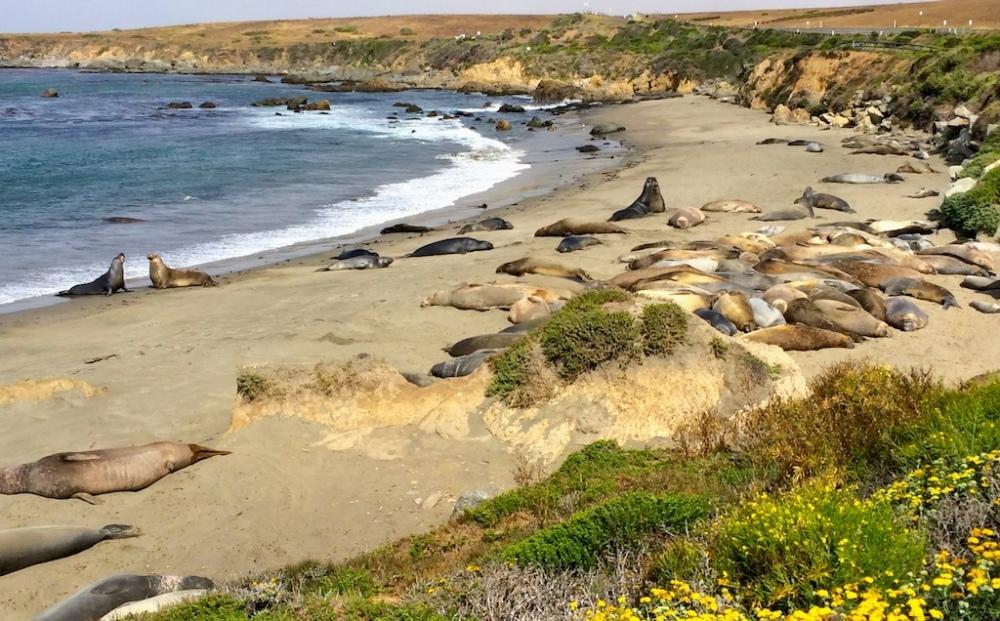 Elephant Seal Sanctuary