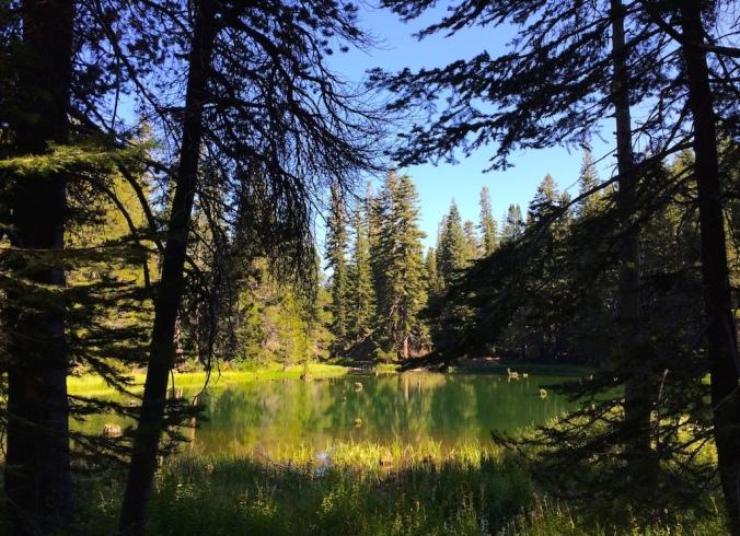 Forrest Pond